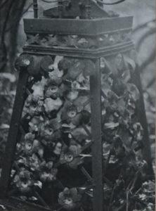 Zdjęcia z archiwum WUOZ