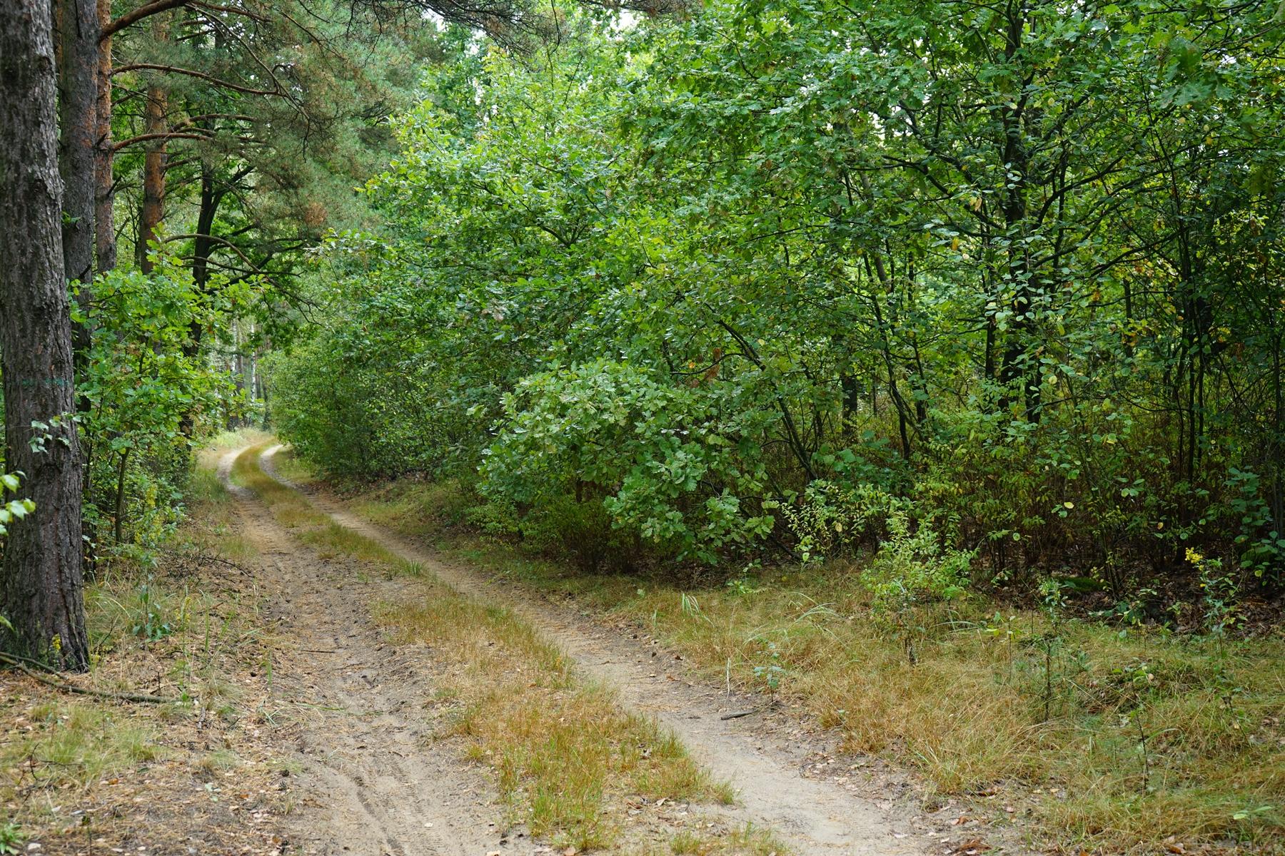 Leśna droga prowadząca w kierunku Jasienia, przy której po prawej stronie znajduje się cmentarz